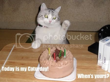 today-is-my-caturday-whenz-yours.jpg