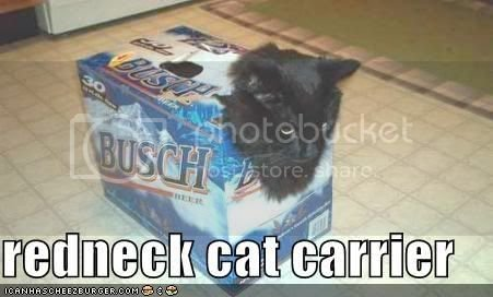 funny-pictures-cat-carrier-beer-box.jpg