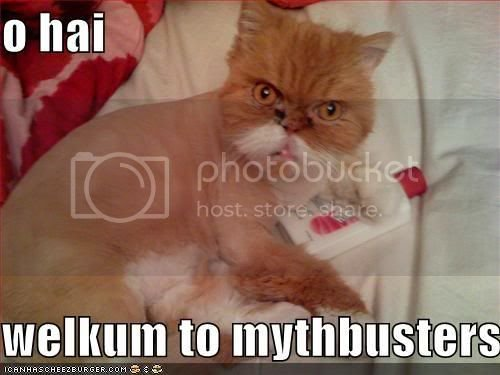 funny-pictures-mythbuster-cat.jpg
